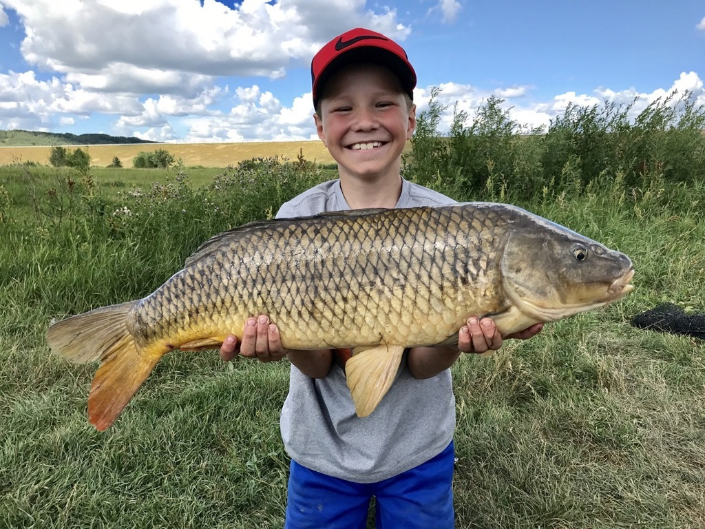 Master Angler Common Carp