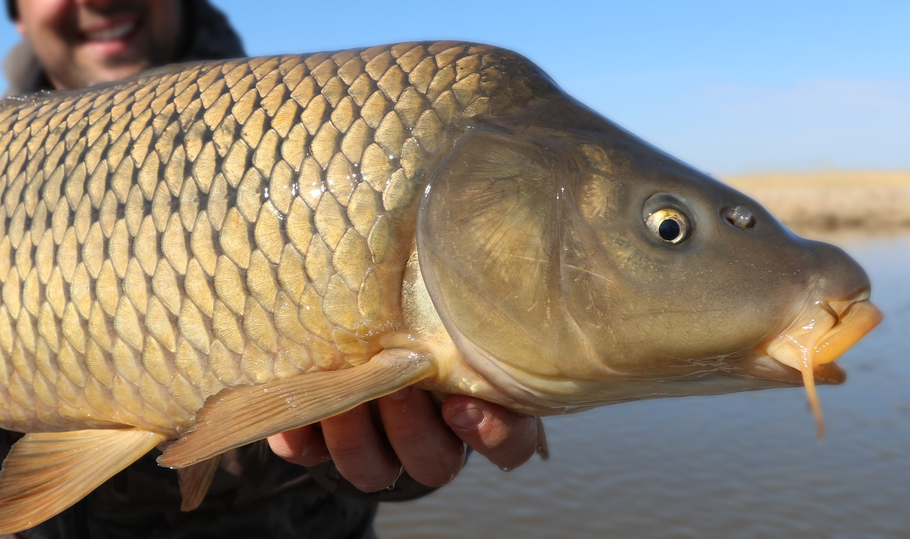 Common Carp - 12 Months of Master Angler photo contest