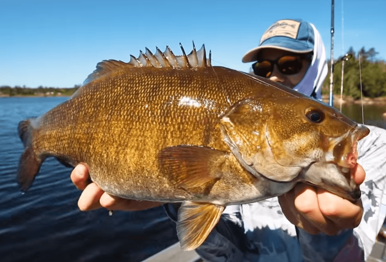 Master Angler smallmouth bass