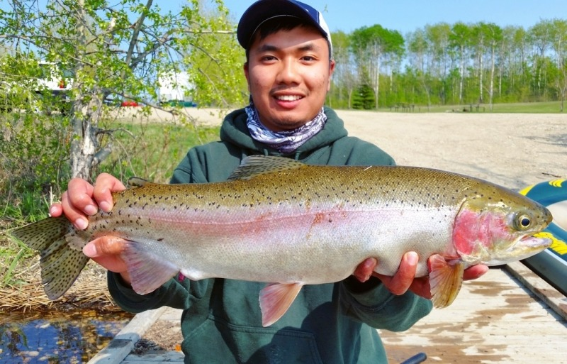 Manitoba Rainbow Trout