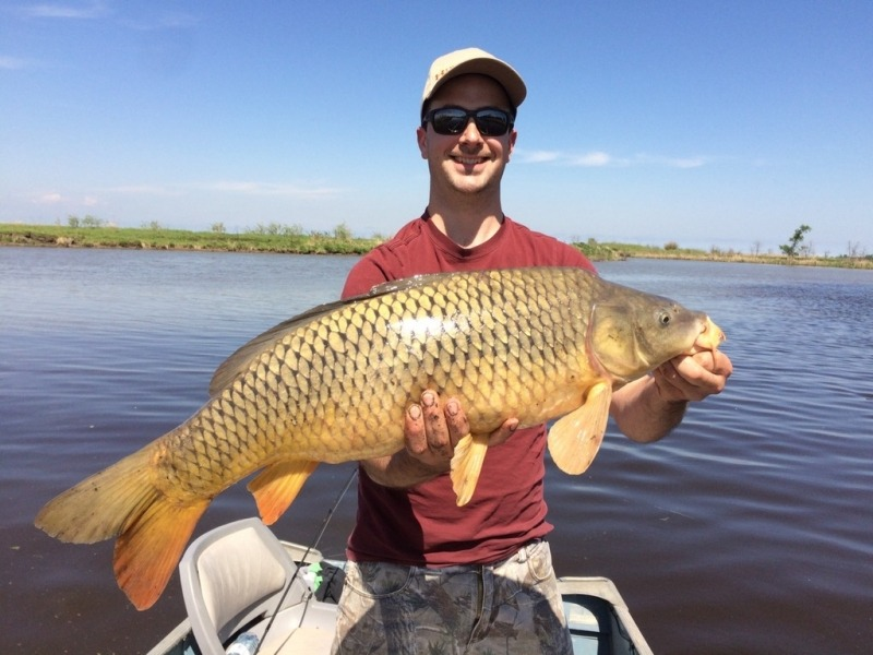 Manitoba Common Carp