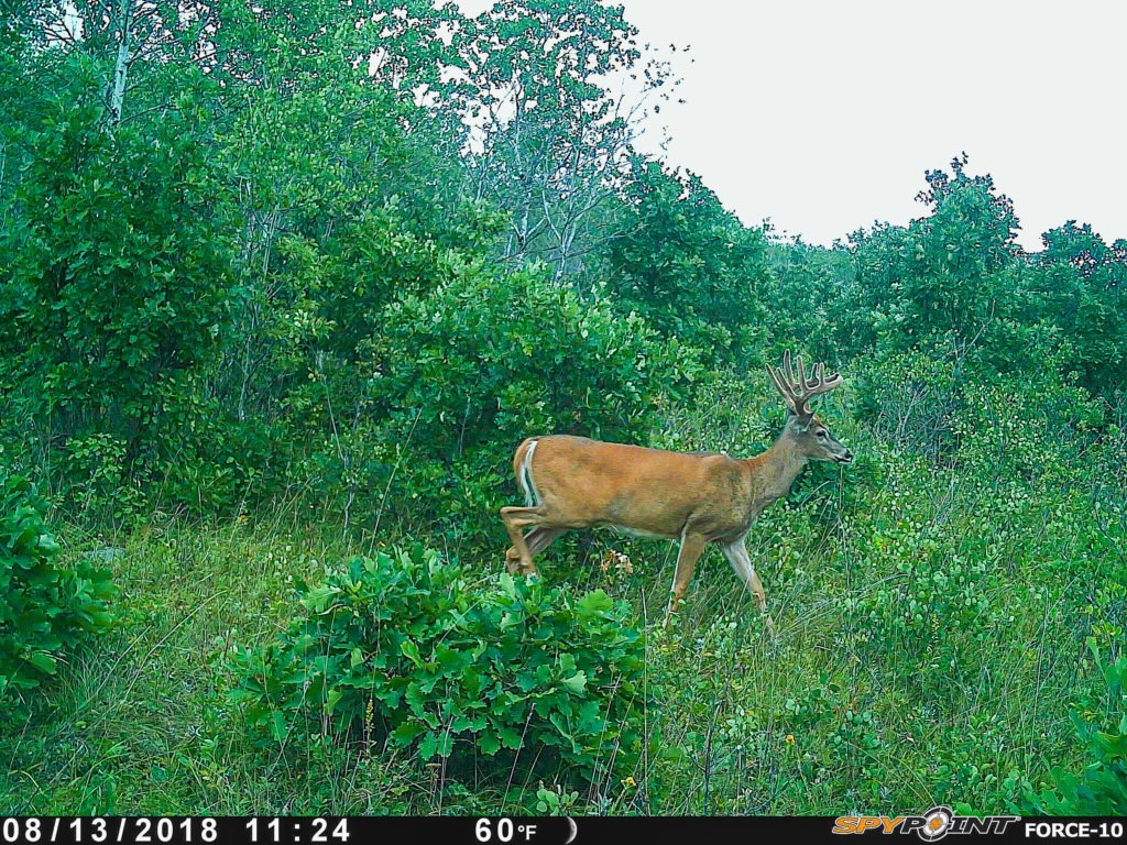 deer scouting tips