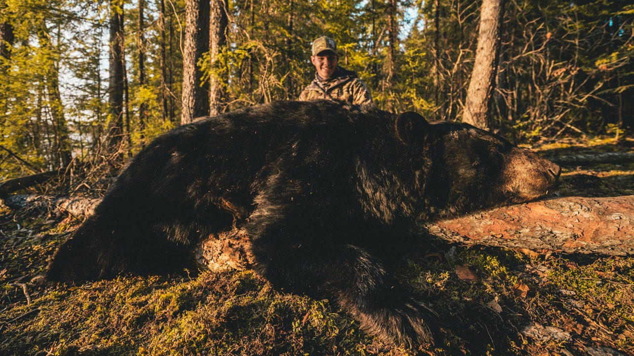 manitoba black bear hunts