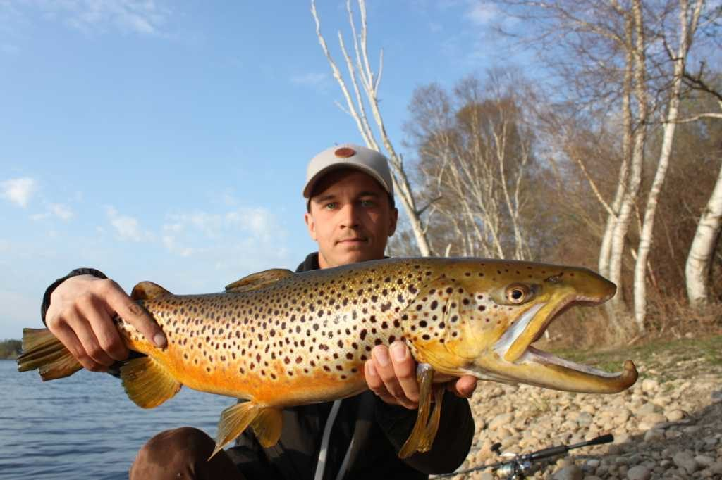 master angler brown trout