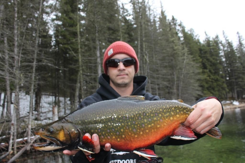 master angler brook trout