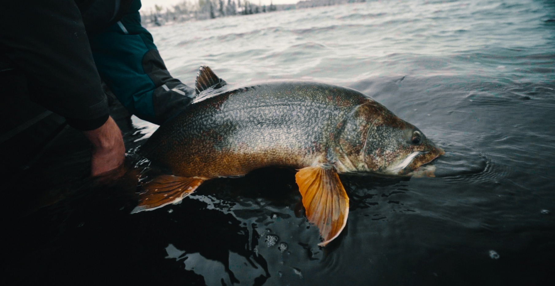 Lake Trout Facts